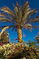 Palm trees, Abu Simbel, Lake Nasser, Egypt