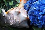Hydrangea & Whelk Shell DSC2794