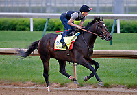 LOUISVILLE, KENTUCKY - APRIL 30: McCraken, owned by Whitham Thoroughbreds LLC and trained by  Ian R. Wilkes, exercises in preparation for the Kentucky Derby at Churchill Downs on April 30, 2017 in Louisville, Kentucky. (Photo by Jon Durr/Eclipse Sportswire/Getty Images)