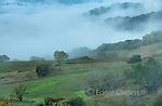 Clearing Rain, Marietta Vineyards, Yorkville Highlands, Mendocino County, California.psd
