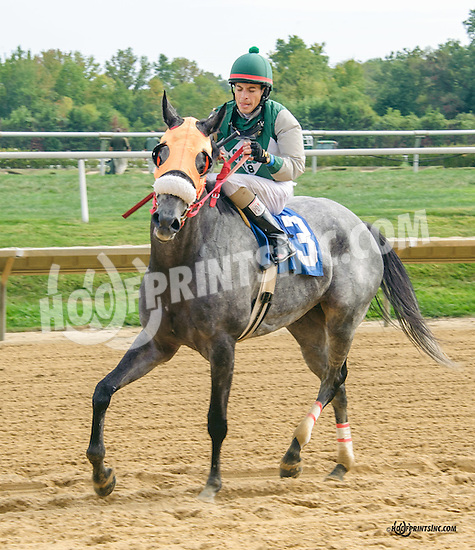Silk n'Sequins winning at Delaware Park on 9/29/15