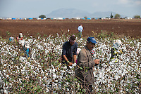 TURKEY, Asmali, near Adana, syrian refugees from Kobane harvest cotton by hand for low wages for a turkish farmer, they have fled from Kobani four weeks ago and camp on the farm in tents seen in the background / TUERKEI, Asmali, bei Adana, syrische Fluechtlinge aus Kobane ernten Baumwolle per Hand fuer geringen Lohn fuer einen tuerkischen Farmer, sie sind aus Kobane vor 4 Wochen gefluechtet und leben auf der Farm in Zelten aus Planen, im Hintergrund zu sehen