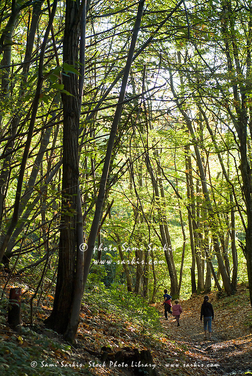 Children walking in the woods during autumn, France.