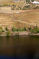 vineyards ferreira quinta vista alegre douro portugal