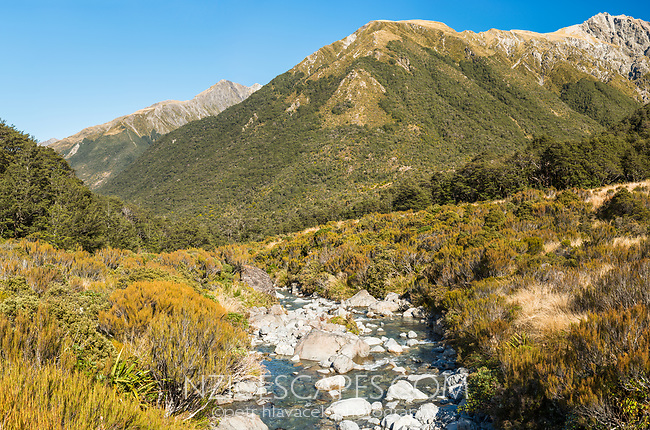 Alpine stream and vegetation, Arthur's Pass National Park, Canterbury, New Zealand, NZ