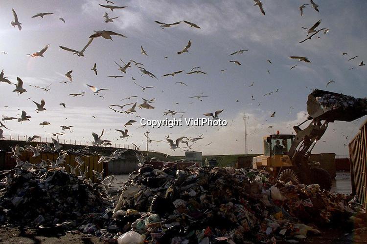 Foto: VidiPhoto..GELDERMALSEN - Duizenden krijsende meeuwen duiken bij de Afvalverwerking Rivierenland (AVRI) op de vers aangevoerde bergen huisvuil. Het blijft een boeiend gezicht om te zien hoe de dieren elke lading bestormen, zonder acht te slaan op de brullende machines die het afval in grote containers dumpen. Automobilisten op de A15 zien de opslag van de AVRI vanaf de snelweg als een grote groene geluidswal. Maar wat daar onder zit is stukken minder fris dan zo op het eerste gezicht lijkt.