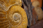 Fine art photograph of a large unpolished Moroccan Ammonite from the Atlas Mountains in a roadside stand on the road from Marrakech to Essaouira.