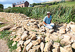 Man working building a dry stone wall near Abbotsbury, Dorset, England, UK