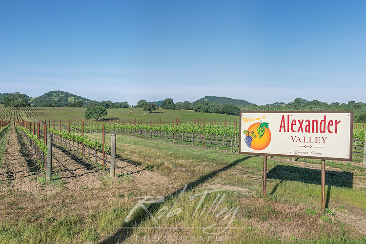 USA, CA, Sonoma County, Alexander Valley, Spring Vineyard