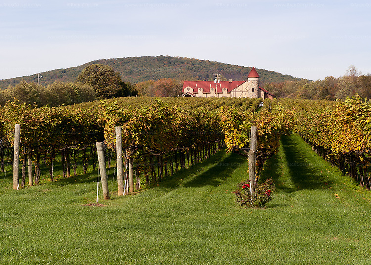 Neat vineyards span the space between the road and the winery building at Horton Vineyards.