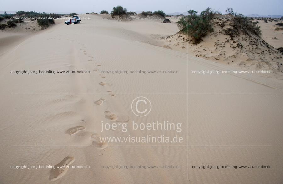 EGYPT, Bahariyya Oasis, desert and sand dunes , tamarix trees / AEGYPTEN, Bahariyya Oase, Wueste und Sandduene, Tamarisken baumartige Pflanzen