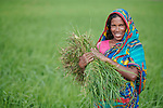 Rowshan Ara weeds a rice field in Kunderpara, a village on an island in the Brahmaputra River in northern Bangladesh.