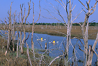 Kayakers on Dividing Creek, Egg Island Wildlife Management Area, New Jersey