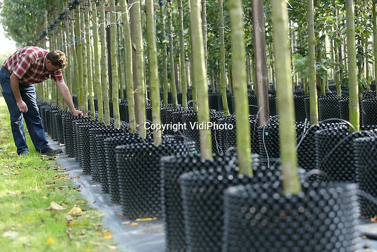 Foto: VidiPhoto..OPHEUSDEN - Boomkweker Teus Willemsen uit Opheusden is een van de eersten in Nederland die is overgestapt van reuzenpotten naar zogenoemde springringen; een vinding uit Engeland. Een deel van de jonge boompjes wordt opgepot, zodat de wortelgroei beperkt blijft. Omdat de wortels in een potvorm, dus rond, groeien, bestaat het gevaar van scheefgroei later. De zogenoemde kunststof springring voorkomt dat. De boomwortels groeien nu recht en blijven klein.