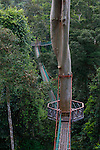 The canopy walk at the Borneo Rainforest Lodge on Sunday April 28th 2013 in Malaysia. (Photo by Brian Garfinkel)