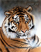 Sandi, REALISTIC ANIMALS, REALISTISCHE TIERE, ANIMALES REALISTICOS, paintings+++++,USSN84,#a#, EVERYDAY ,tiger,tigers, ,puzzles