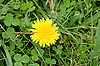 flower at Delaware Park on 9/29/12