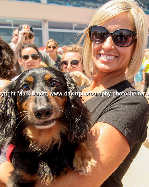 Prairie Meadows celebrated Fathers Day with its first ever first Wiener Dog Races. The four-legged competitors and their owners hit the starting gate in a 30-yard dash for cash prizes and a shot at the Wiener's Circle. Rebecca Niehaus of West Des Moines brought two dog for the fun the race.