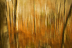 Abstract view of forest in Acadia National Park, Maine
