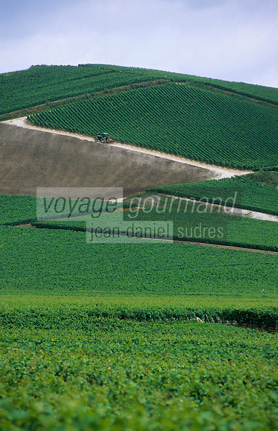 Europe/France/Champagne-Ardenne/51/Marne/Vallée de la Marne/Ay : Vignoble champenois
