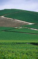 Europe/France/Champagne-Ardenne/51/Marne/Vallée de la Marne/Ay: Vignoble champenois