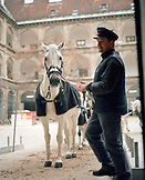 AUSTRIA, Vienna, the famous Lipizzaner Stallions being led out of the stables