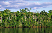 Juruena River, Mato Grosso State, Brazil. Riverside vegetation in the Amazon basin.