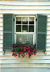 Shutters window with flower box of petunias Commonwealth of Virginia, Red Petunia flowers which are popular low-lying annuals that brag of their diversity of brilliant color and attractive green foliage.