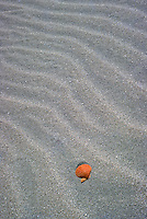 Shell on sand Fraser Island, Queensland