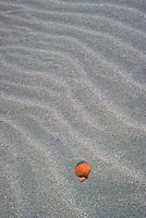 Shell on sand Fraser Island, Queensland