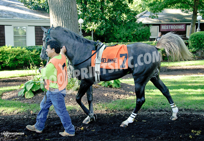 Lazur Hess before The Delaware Arabian Juvenile Championship at Delaware Park on 9/27/14