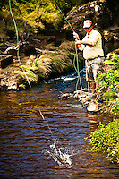 Fly fisherman fishing a small tannine river of the island of Flores at the Azores for rainbow trouts.