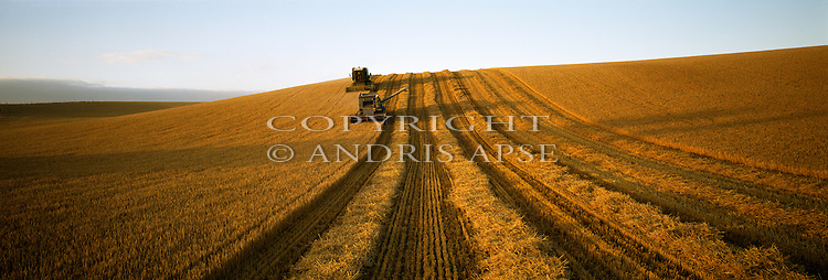 Harvesting Barley at Woodlands near Temuka, South Canterbury New Zealand.