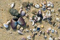 Schelpjes op het strand aan de Tasmaanse zee, Australië
