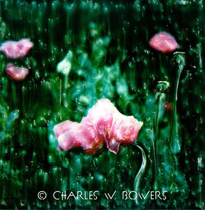 Poppies are one of the most coveted garden flowers. Poppies love to join together to show off. Your garden needs some poppies.<br />