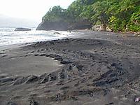 tracks left by a nesting leatherback sea turtle, Dermochelys coriacea, Dominica, Caribbean, Atlantic