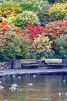 Pond and geese/ducks with bloominmg rhododendrons and azaleas at Crystal Gardens. Portland