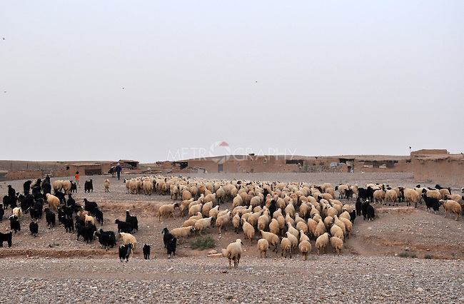 DOWDA, IRAQ:  Village shepherds bring their flock back to their house in the evening...Iraqi forces decimated the Dowda area in Germian during the 1988 Anfal genocidal campaign against the Kurds.  Daily life continues is this extremely harsh part of Iraq...Photo by Aram Karim/Metrography