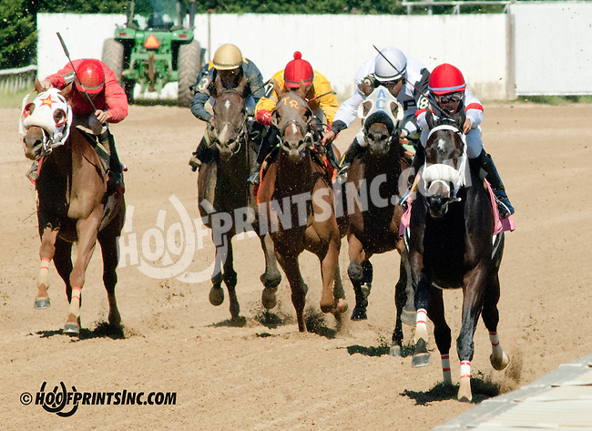 Banner Elk Lady winning at Delaware Park on 9/4/13