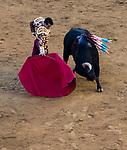 Feria de Fallas 2017.<br /> Corrida de Toros.<br /> El Fandi - Manzanares - Roca Rey.<br /> Toros de Nu&ntilde;ez del Cuvillo.<br /> Valencia, Valencia (Spain).<br /> 17 de marzo de 2017.