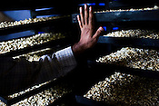 The manager of the cashew processing unit shows the roasted cashews in cashew processing factory in Prassala, Kanyakumari district in Tamil Nadu, India.. .An estimated number of 500,000 women process cashews for a living in Tamil Nadu and Kerela. 2 million people are employed by cashew industry across India making it the world's biggest exporter of shelled cashews. .The working conditions in these processing units are way below industry standards and violates the basic rights. Wages are as low as Rs. 50 (US $1) per day. The problems for these women is not restricted to low wages. Many women are being injured by their jobs as the factory owners cut corners with health and safety. Oil released during the cashew shelling process is highly caustic, leading to common cases of dermatitis, blistering and discolouration of workers' skin. Women working in these units suffer from pains in their leg muscles, backs and knee joints after squatting positions on mud or concrete floors. It is very rare to find tables and chairs provided on shelling duty..Cashew workers' main concern is to increase their earnings and provide better working conditions. .Photo: Sanjit Das