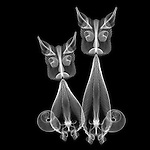 X-ray image of cats (white on black) by Jim Wehtje, specialist in x-ray art and design images.