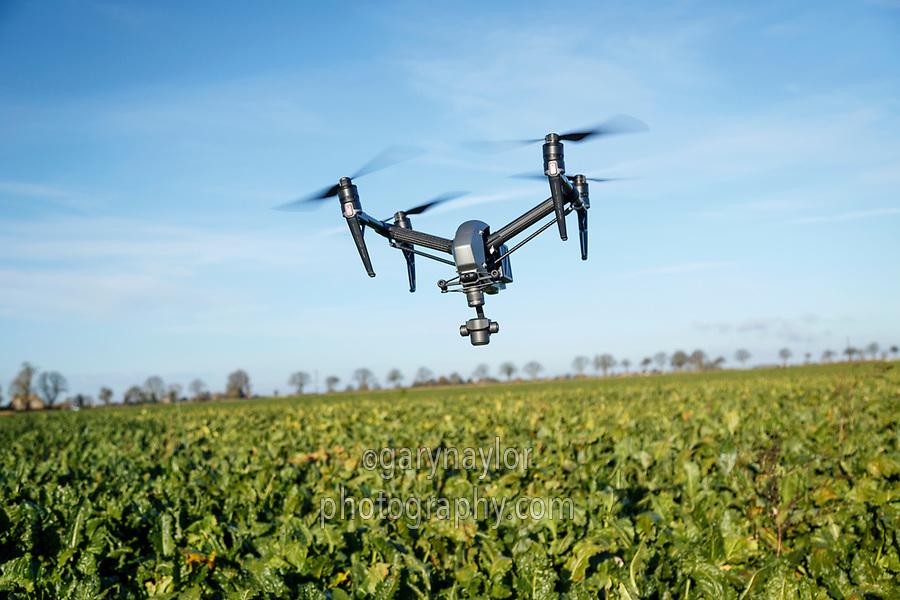 Drone in flight above sugar beet - Lincolnshire, November