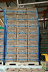 Costa Rican bananas packed in boxes and ready for worldwide shipment.  ..Costa Rica, bananas, packed boxes, shipment, banana plantation, Del Monte