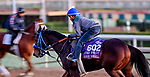 October 28, 2019 : Breeders' Cup Turf Sprint entrant Eddie Haskell, trained by Mark Glatt, exercises in preparation for the Breeders' Cup World Championships at Santa Anita Park in Arcadia, California on October 28, 2019. Scott Serio/Eclipse Sportswire/Breeders' Cup/CSM