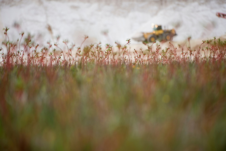 Rocla silica sand extraction and Banksia habitat restoration