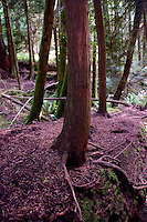 Fragrance Lake Trail, Larrabee State Park, Bellingham, Washington, US