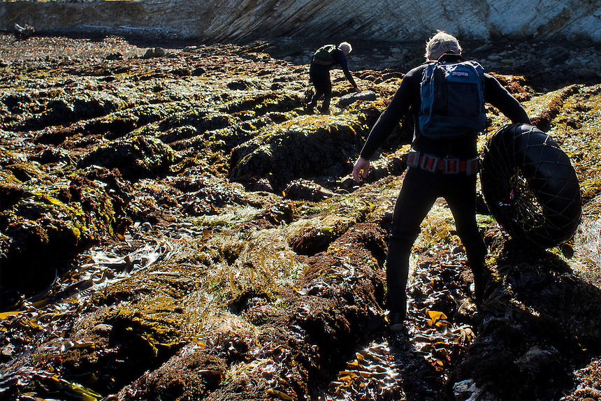 Brothers Richard and Bob Tankersley carefully make their way inland over jagged, kelp-covered rocks after abalone diving at Point Arena, Calif., on June 6, 2012. (Photo by Alvin Jornada, Special to The Chronicle)
