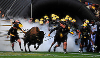 18 September 08: Colorado mascot Ralphie is led out in front of Colorado players prior to a game against West Virginia. The Colorado Buffaloes defeated the West Virginia Mountaineers 17-14 in overtime at Folsom Field in Boulder, Colorado. For Editorial Use Only.