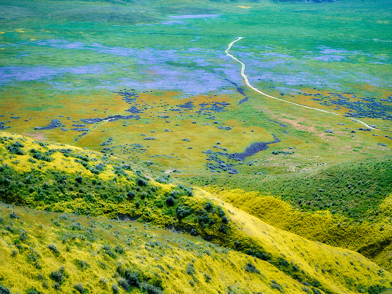Dirt road with wildflowers. Carrizo Plain National Monument, California